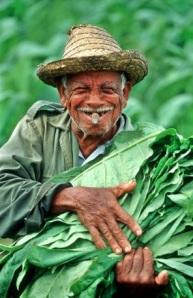 A Cuban veguero